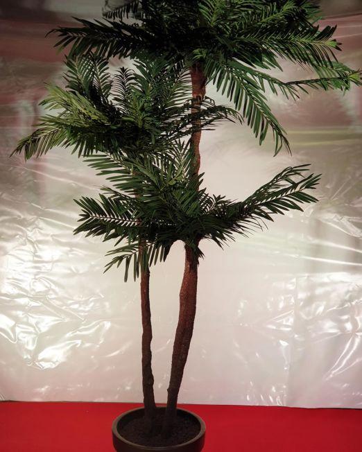 Festcompany-pflanzen-palme