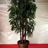 Bambus Baum